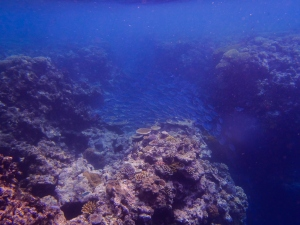 A school of fish swimming through a gap in the reef