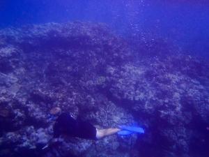 Ryan Swimming in the reef