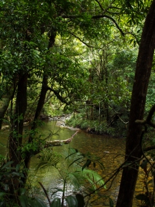 Rainforest river