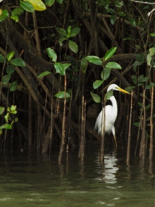 A Heron in the Daintree River