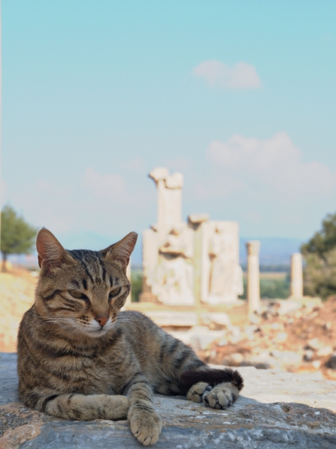 One of the many feral cats that roam Ephesus.