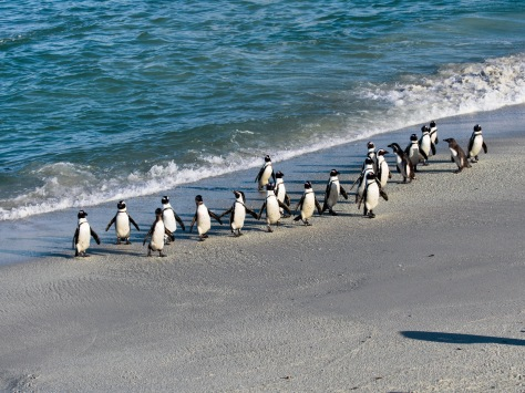 Ain't no party like a penguin party!