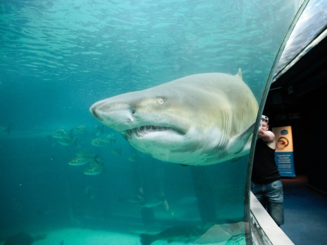 A much easier (and less nauseating) way to see a shark.