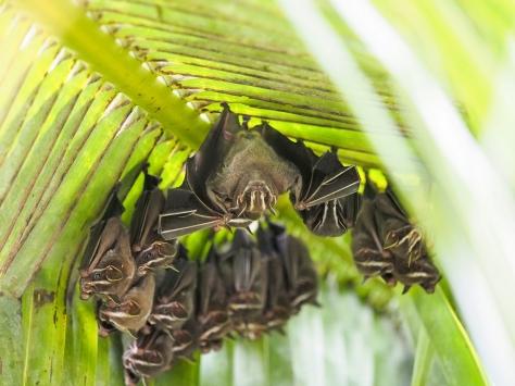 Bats (very small bats)